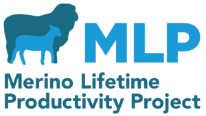 Merino Lifetime Productivity Project | Merino Superior Sires