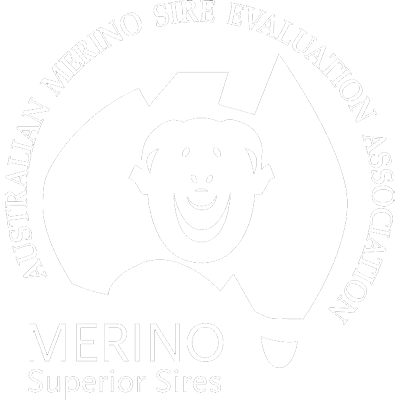 Australian Merino Sire Evaluation Association | Merino Superior Sires