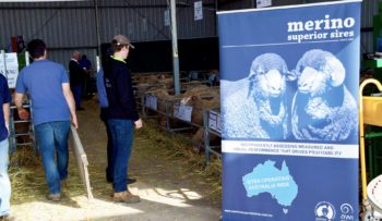 Field Day Banner | Merino Superior Sires