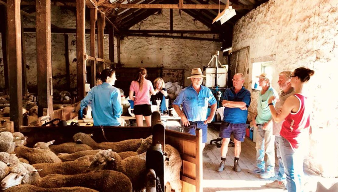 South Australia - Heritage Sheep Shed | Merino Superior Sires