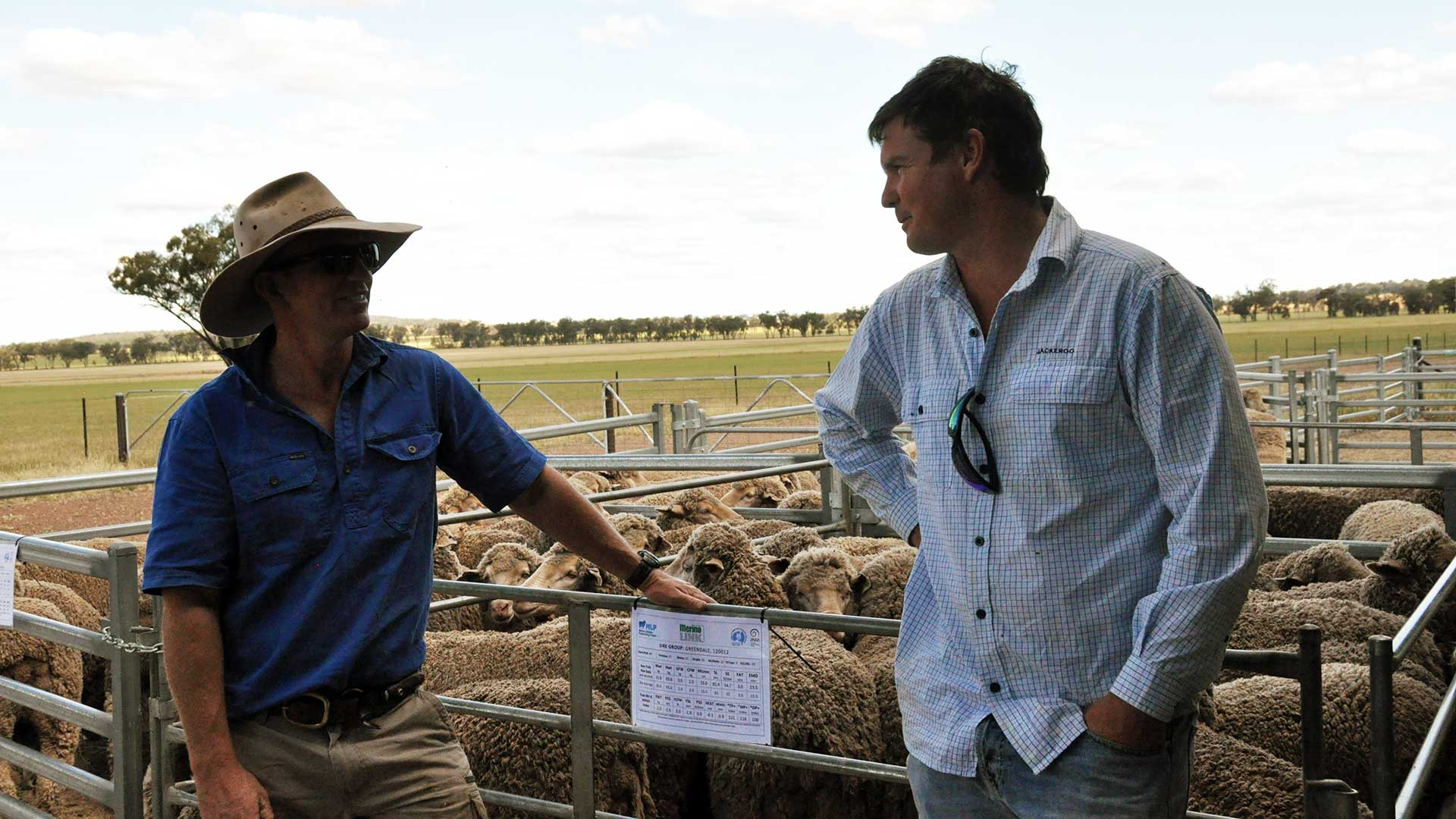 MerinoLink - Two Blokes & Sheep | Merino Superior Sires