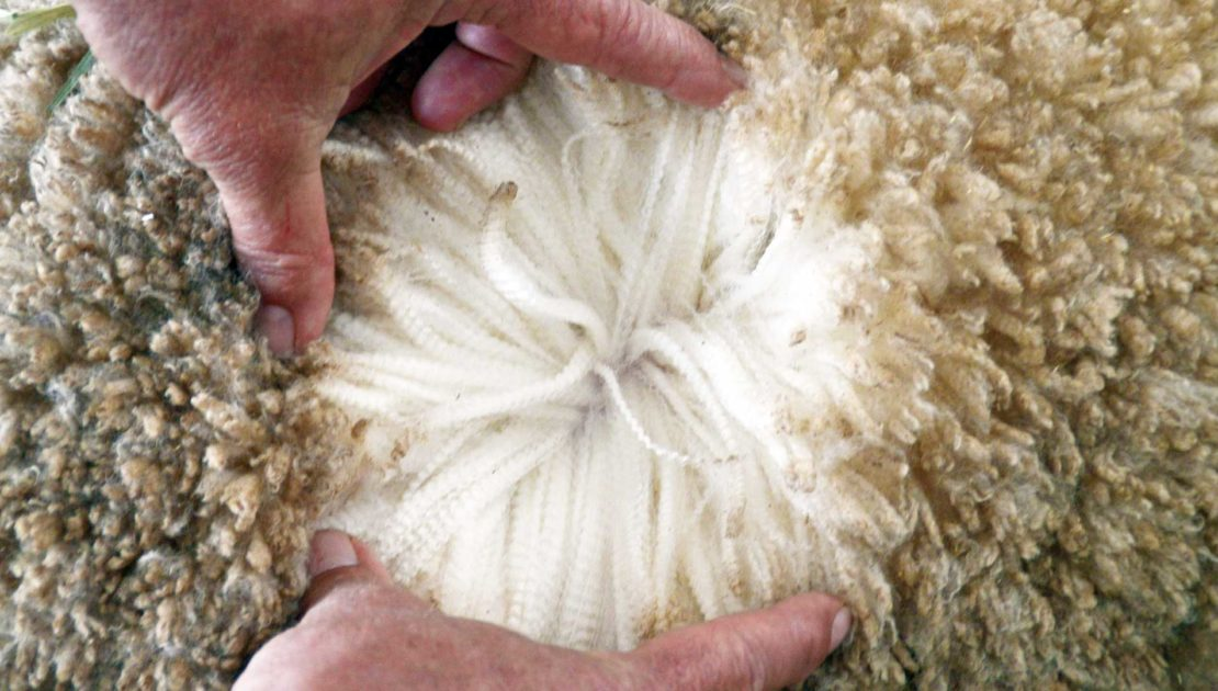 Muresk - Wool Grading | Merino Superior Sires